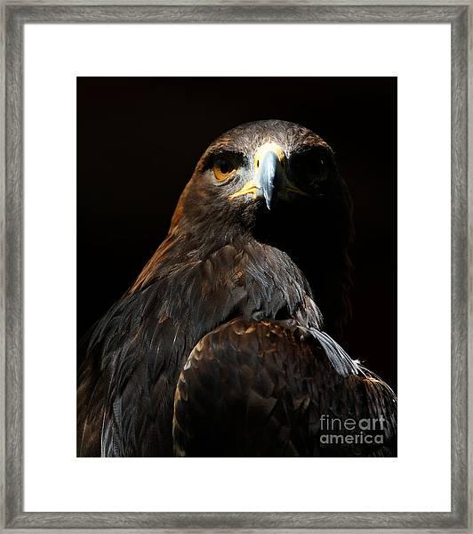 Maleficent Golden Eagle Framed Print