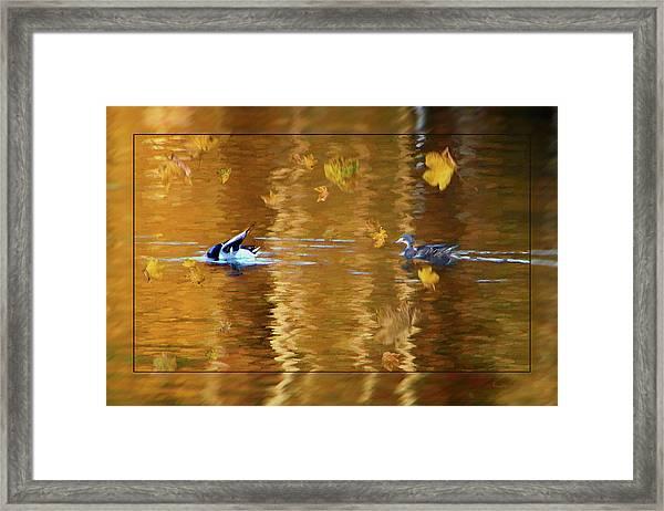 Mallard Ducks On Magnolia Pond - Painted Framed Print