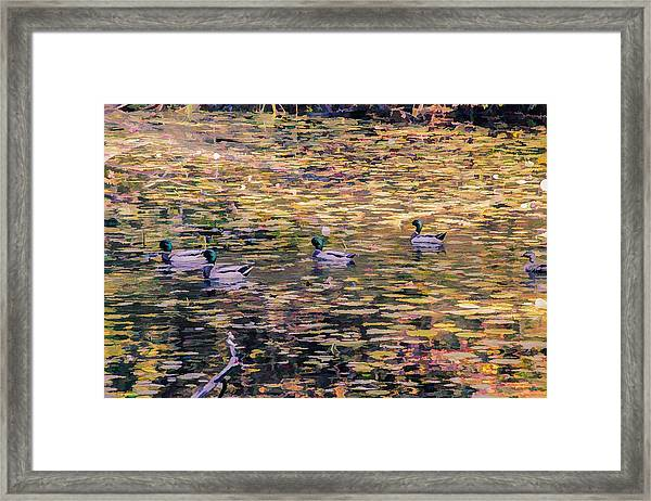 Mallards On Autumn Pond Framed Print