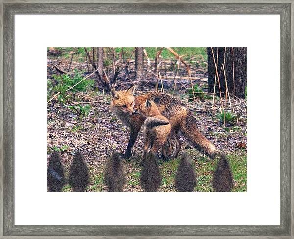 Mama And Kit Apr 2015 Framed Print