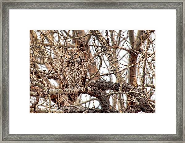 Mama Owl In Camo Framed Print