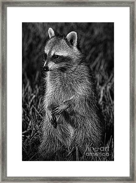 Mama Raccoon Framed Print