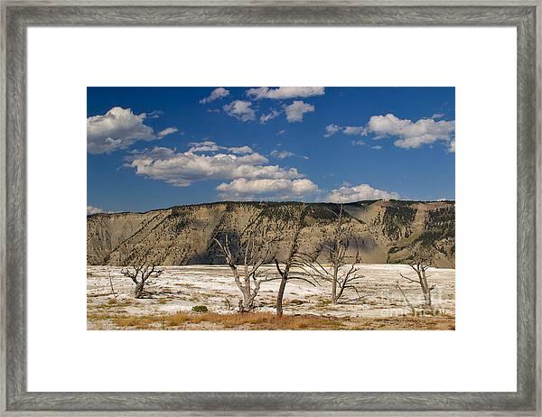 Mammoth Springs Sentinels Framed Print