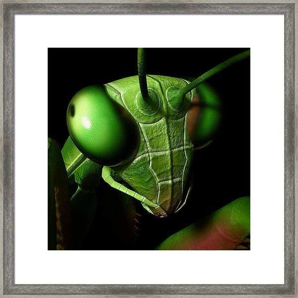 Mantis Head Framed Print