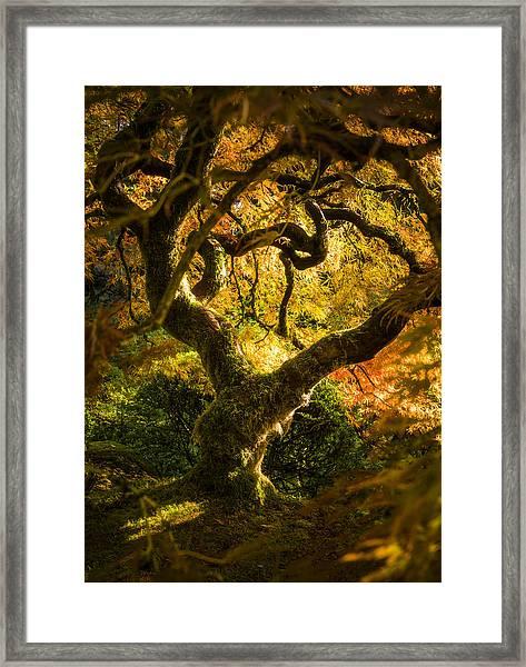 Maple Fairytale Framed Print