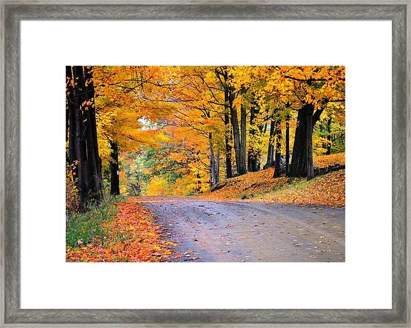 Maples Of Rupert Vermont Framed Print