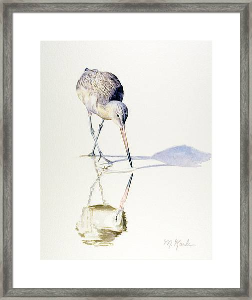 Marbled Godwit Times Three Framed Print