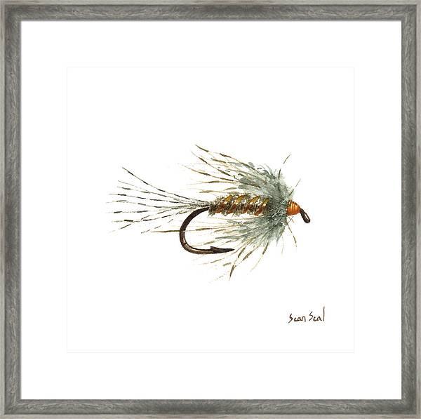March Brown Spider Framed Print