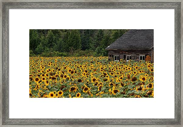 So Many Faces Framed Print