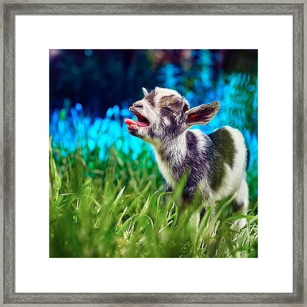 Baby Goat Kid Singing Framed Print