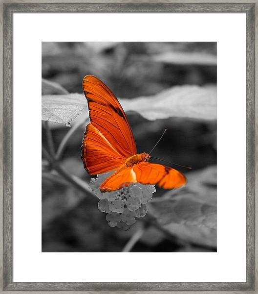 Marmalade Delight Colorized Framed Print