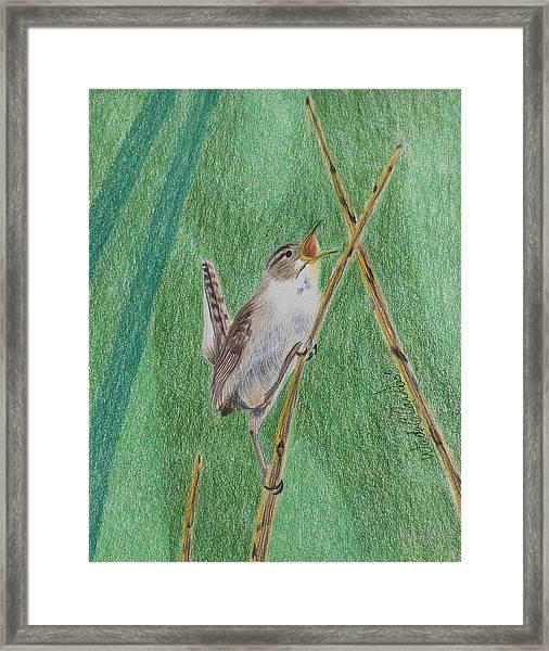Marsh Wren Framed Print