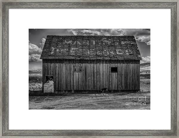 Martins  Framed Print