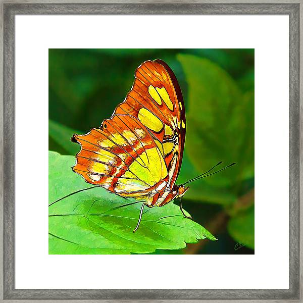 Marvelous Malachite Butterfly Framed Print