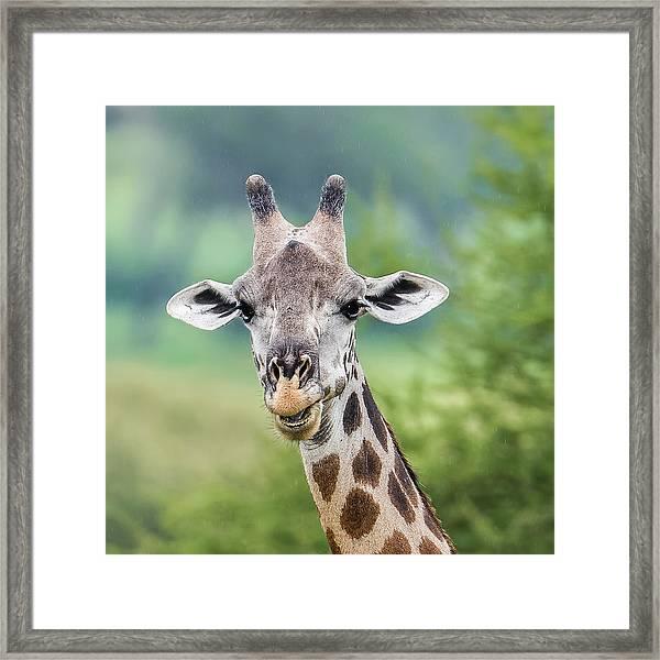 Masai Giraffe Portrait Framed Print