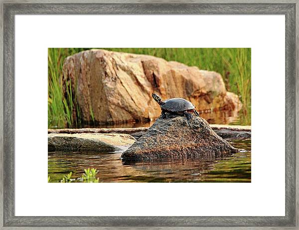 Master Of This Rock Framed Print
