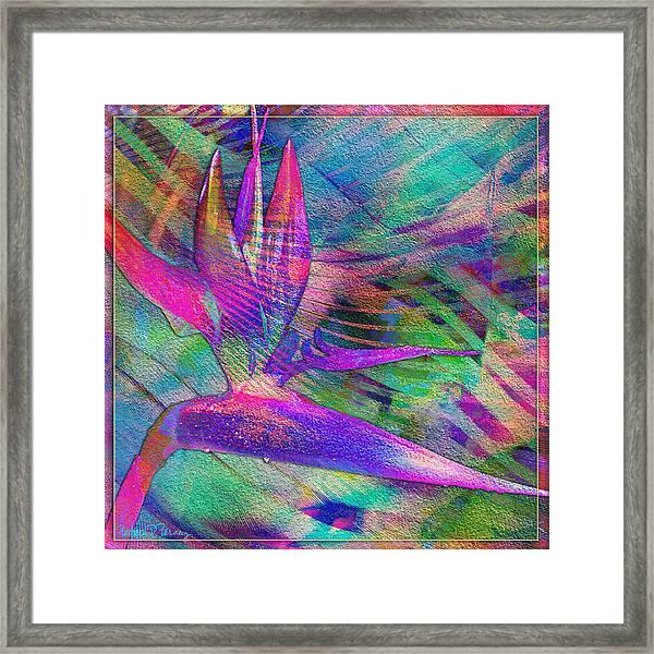 Maui Bird Of Paradise Framed Print