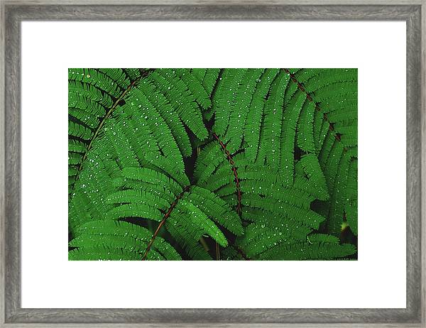 Framed Print featuring the photograph Maui Forest by Luca Bravo
