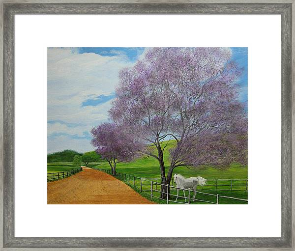 Maui Upcountry Framed Print by Jeffrey Oldham