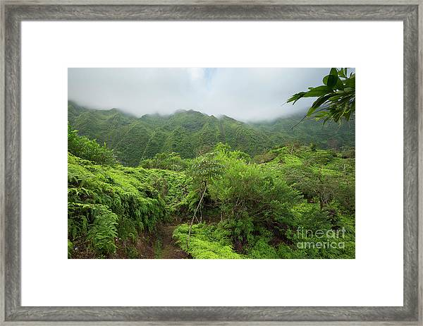 Maunawili Demonstration Trail Framed Print