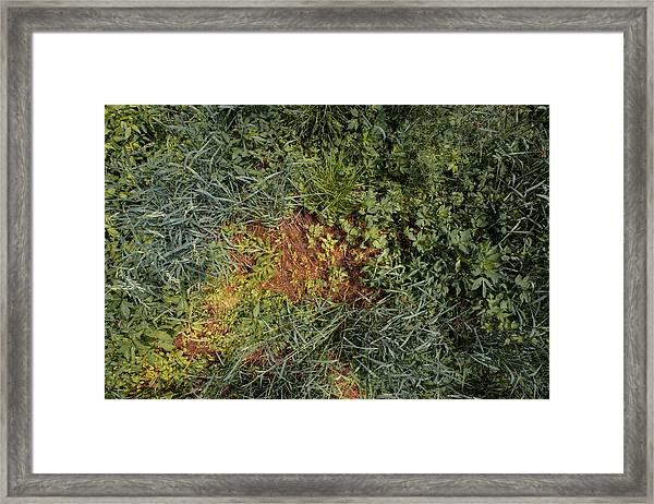 Meadow Floor Framed Print