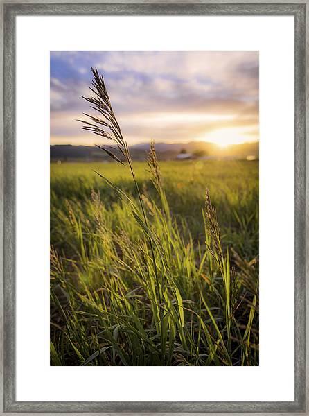 Meadow Light Framed Print