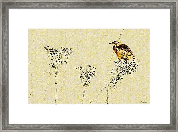 Meadowlark In Kansas Prairie 1 Framed Print