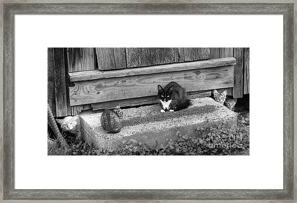 Meal Time Framed Print
