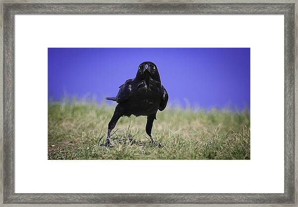 Menacing Crow Framed Print
