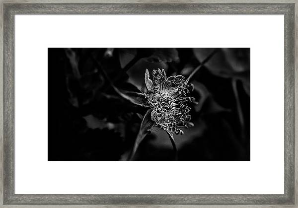Medallion Framed Print