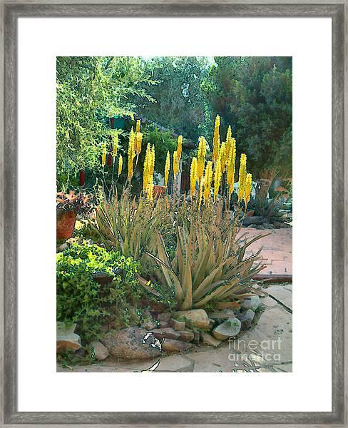 Medicine Aloes In Bloom Framed Print