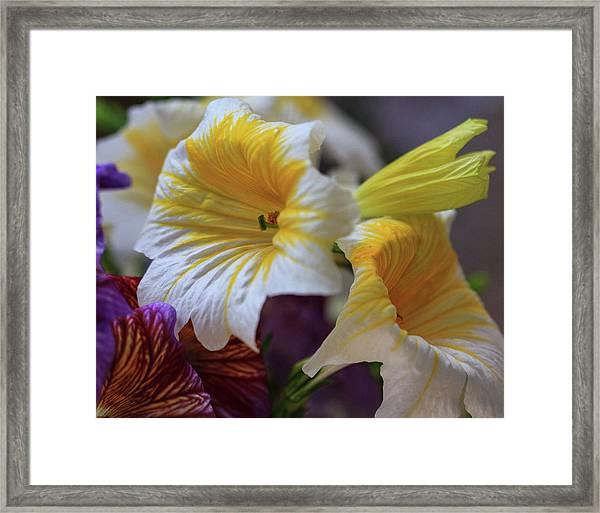 Mellow Framed Print