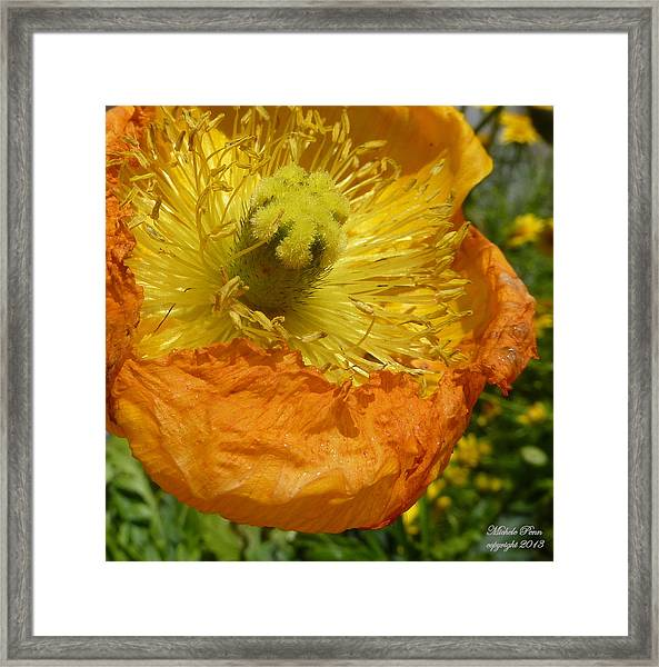 Mellow Yellow - Signed Framed Print