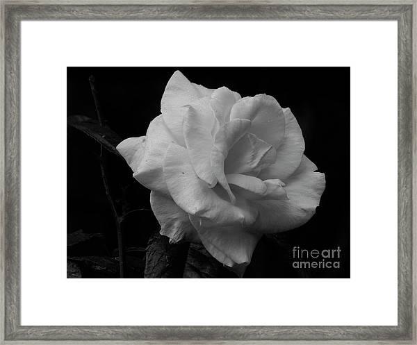 Mendocino Rose01 Framed Print