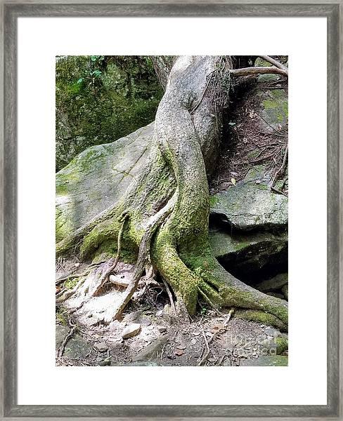 Mermaid Tails Framed Print
