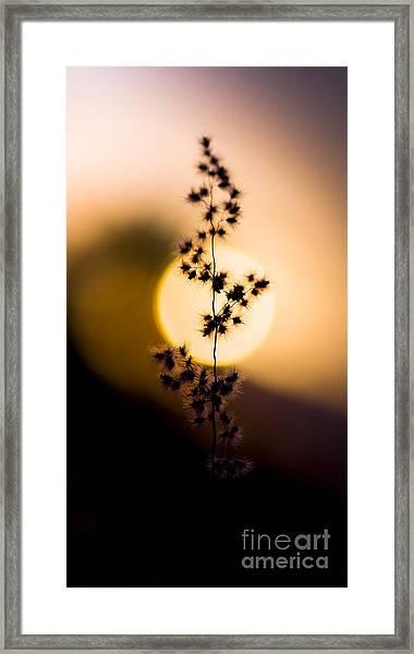 Mexican Desert Sunset Framed Print
