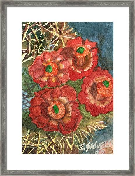 Mexican Pincushion Framed Print