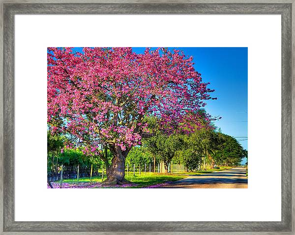Miami's Fall Colors Framed Print by William Wetmore
