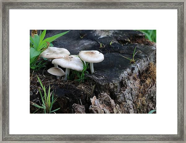 Mid Summers Fungi Framed Print