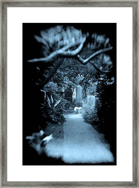 Midnight In The Garden O Framed Print