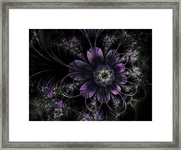 Midnight Mistletoe Framed Print