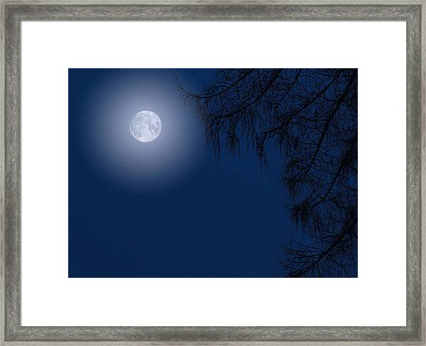 Midnight Moon And Night Tree Silhouette Framed Print