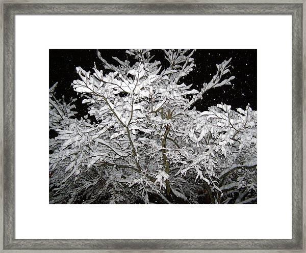 Midnight Snow 3 Framed Print by Christine Sullivan Cuozzo
