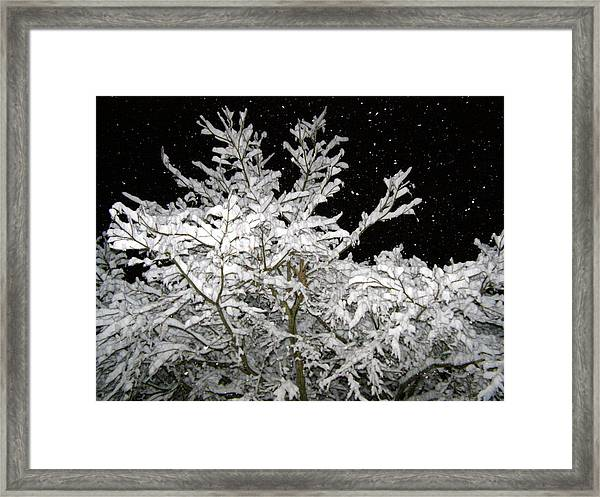 Midnight Snow 4 Framed Print by Christine Sullivan Cuozzo