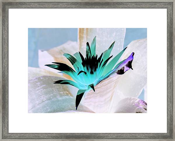 Midori Blue Framed Print