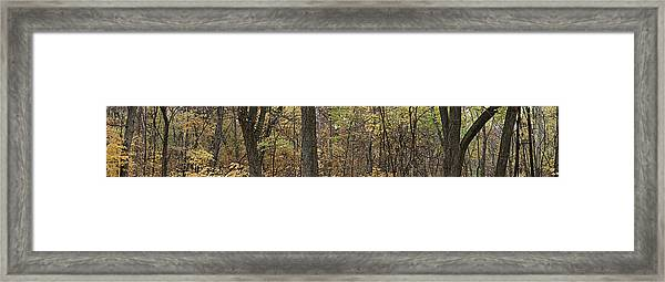Midwest Forest Framed Print