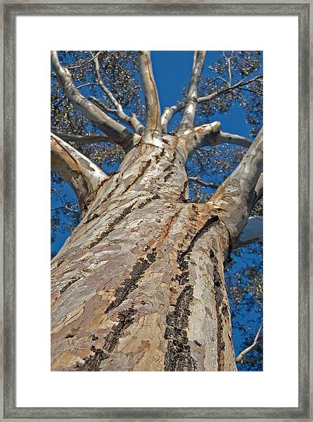 Mighty Framed Print by Jean Booth