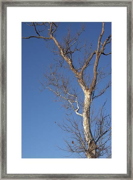 Mighty Tree Framed Print