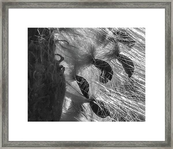 Milkweed Sunburst In Black And White Framed Print