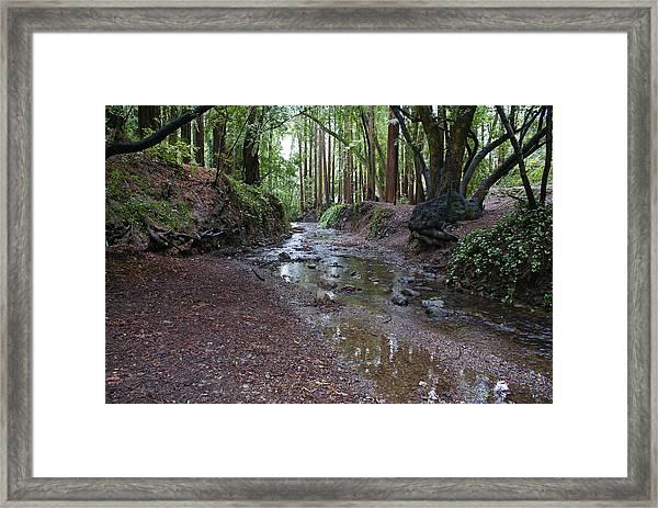 Miller Grove Framed Print